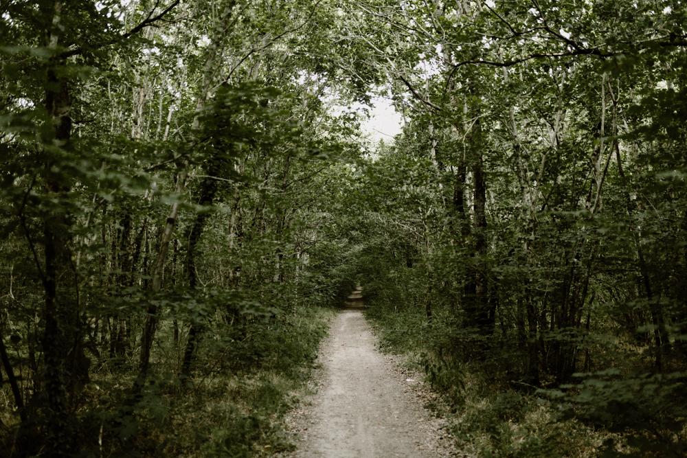 a Séance photo engagement dans la forêt de grimbosq en normandie