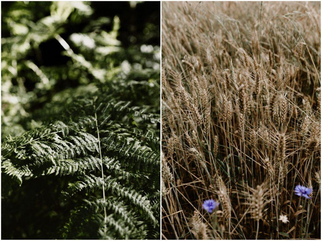 h Séance photo engagement dans la forêt de grimbosq en normandie