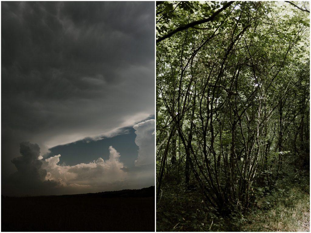b Séance photo engagement dans la forêt de grimbosq en normandie